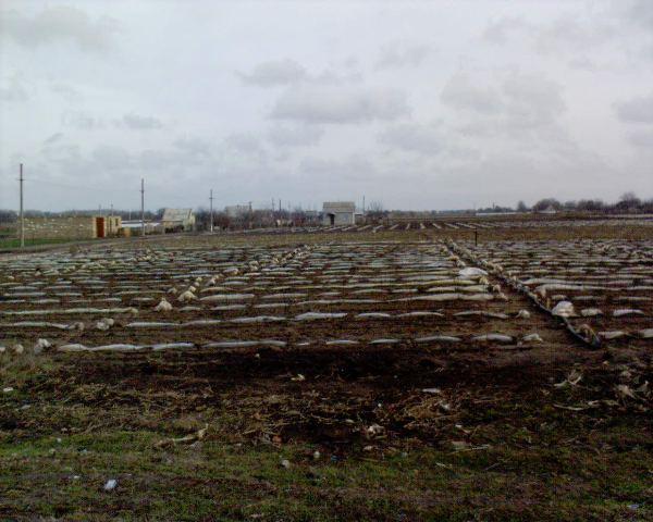 городи в січні в Копанях